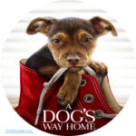 A Dog's Way Home (2019) R0 Custom Clean Label